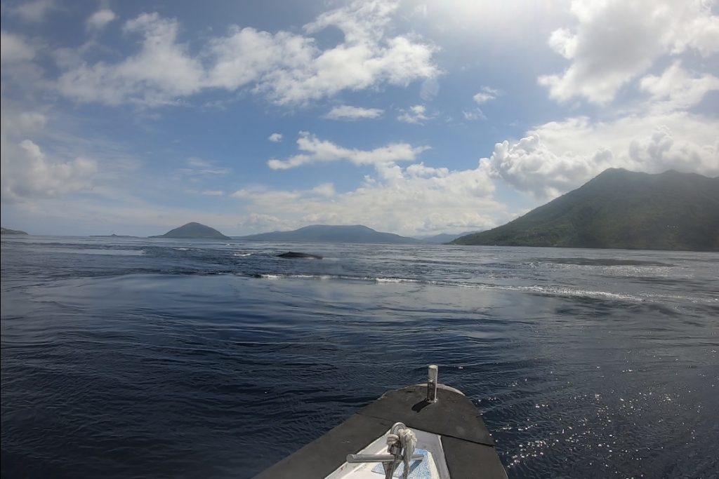 Alor Whale